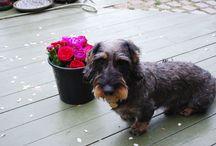 Mine hunde, andres hunde og dyr / Trold, Trold og Rasmus