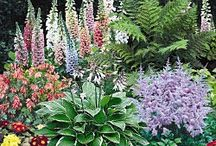 lovely gardens / nice ideas and wish lists / by Shelley Robillard