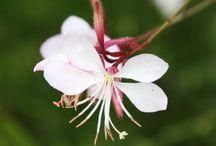 Vaartweg achtertuin / Dit bord bevat de lijst met plantennamen en afbeeldingen daarvan die aangeplant zijn in de bloementuin