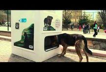 Sokak Hayvanları / evsiz köpekler,kediler