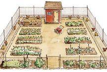 Vegetable & chicken area