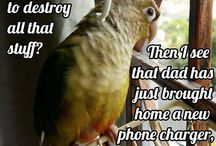 Birdie Quotes...lol