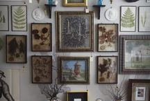 Curiosities and Collections