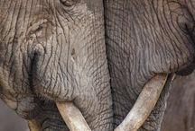 Mes éléphants et autres bestioles
