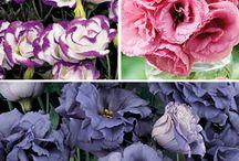 Flowers I Grow