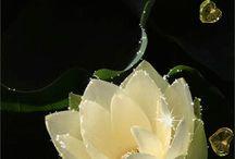 блестящие цветы