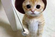 Cosplay by Kittens / Cute Cat Cosplayers