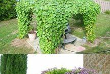 climbing vines