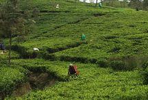 Шри-Ланка / о настроении путешествия на Шри-Ланку