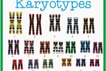 chromosome analysis