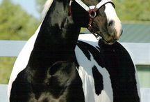 HÄSTAR, KATTER & HUNDAR ♡ horses, cats & dogs