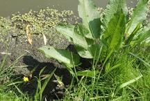Die grüne Flora 07 | 2011 / Statt der Roten Zora sehen Sie hier die Grüne Flora, die sich rund um unsere Agentur erstreckt.