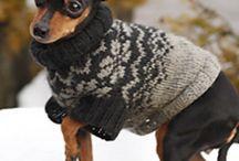 собаки одежда