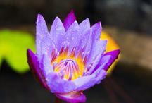 Makro blommor