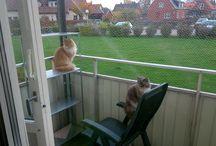 Katter / Katter