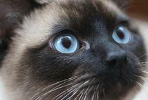 Anatomia kota / Z czego składa się kot?