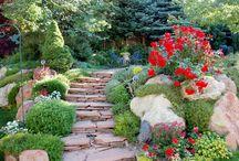 Garden / by Linda Comfort