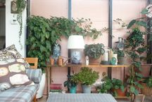 Indoor Plant Ideas