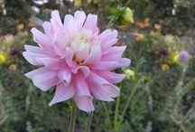 Life on a Flower Farm
