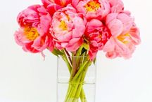 Pretty Pink Flowers | NYC / https://www.gabrielawakeham.com Pretty pink flowers in upscale designer floral arrangements are available for delivery in Manhattan, DUMBO and nearby areas. Soft pink feminine floral looks are perfect for ladies who love flowers! Our pink flower collection includes roses, orchids and peonies. Pink single color flower arrangements are perfect for birthdays, congratulations and they look great in offices, living rooms, dining rooms and bedrooms.