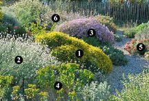 plantas huayca