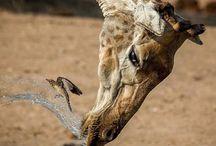 Photography Animal Mix
