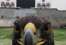 WDE! / War Eagle! / by Jeff Hardegree