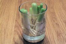 regrow vegetable