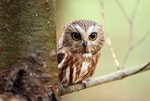 All God's Critters - Birds-Owls / by Kay Hough