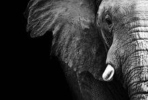 Elefanți ❤️