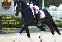 Dressage and Equestrian / by Rhonda Waymire Cline