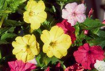 La box florale de Mai / Découvrez la box de Mai contenant 7 sachets de graines de fleurs à semer directement en pleine terre ou en pot : http://www.cultiversonjardin.fr/box/41/Box-Florale-de-Mai