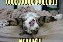 Goodmorning and goodnight