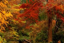 Favorite Autumn Places / by osd4815 .