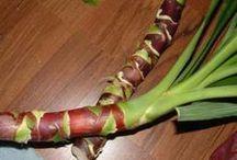 Palme vermehren