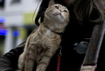 ☆ Streetcat BOB ^..^ / James and Bob, a beautiful story  ♡