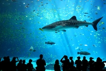 Georgia Aquarium – Atlanta / by Mim Bullock