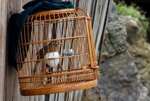 Ini Bahaya Pelihara Burung di Rumah