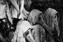 Macabre / Grotesque