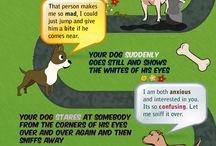 Infographics - Animals