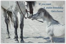 I love Horse Quotes / I love Horse Quotes to Share, Comment and Like. If you would like to contribute just comments and send me a message.