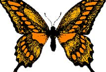 papillon d espoir