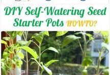 self watering ideas