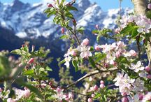Frühling | Primavera / Frühling in Lana und Umgebung | Primavera a Lana e dintorni