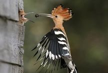 Happy parenting of Woodpecker.