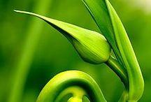 lime green aesthetics