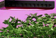 Consigli coltivazione a LED