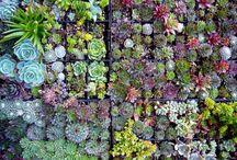 Succulent-love
