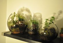 Tiny Friends / terrariums