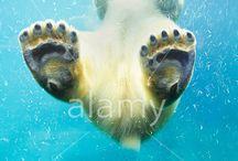 Wildlife / by Alamy
